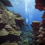 Where to dive in Egypt: St. John's, Daedalus, Fury Shoals