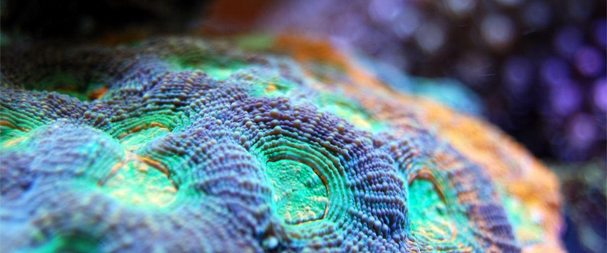 The beauty of coral reefs